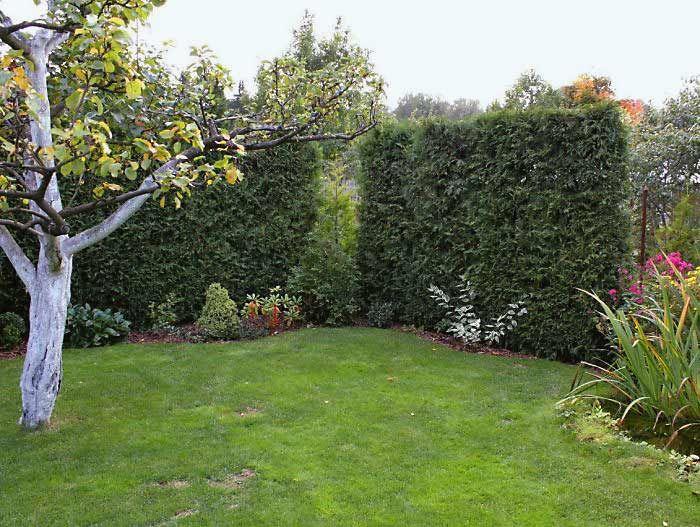Разделить сад на зеленые комнаты