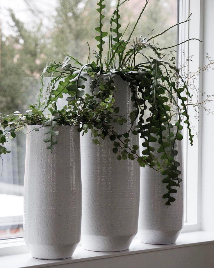 """297 Synes godt om, 4 kommentarer – Design Nest CPH (@designnestcph) på Instagram: """"New XL pots just landed in my window... #planter #grønneplanter #pots #planters #plants #blomster…"""""""