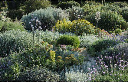 Un jardin sec : pour un jardin sans arrosage
