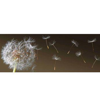 Home affaire, Giclee on Canvas »Dandelion in the Wind«, 150/57 cm Jetzt bestellen unter: https://moebel.ladendirekt.de/dekoration/bilder-und-rahmen/bilder/?uid=395e88d3-b29c-5a47-ab5c-cb8e3a8395cd&utm_source=pinterest&utm_medium=pin&utm_campaign=boards #bilder #rahmen #dekoration