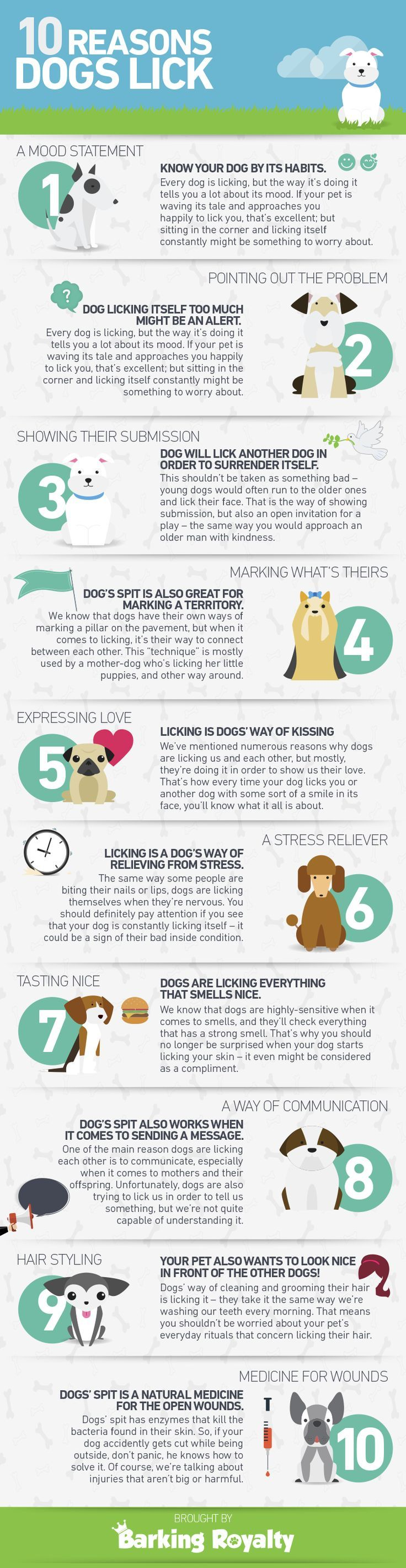 Why do dogs lick? [Infographic] @KaufmannsPuppy