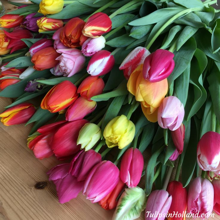 Who is traveling this week to Keukenhof? #travel to the #tulipsinholland spring 2017 http://tulipsinholland.com/tickets-tours-keukenhof/
