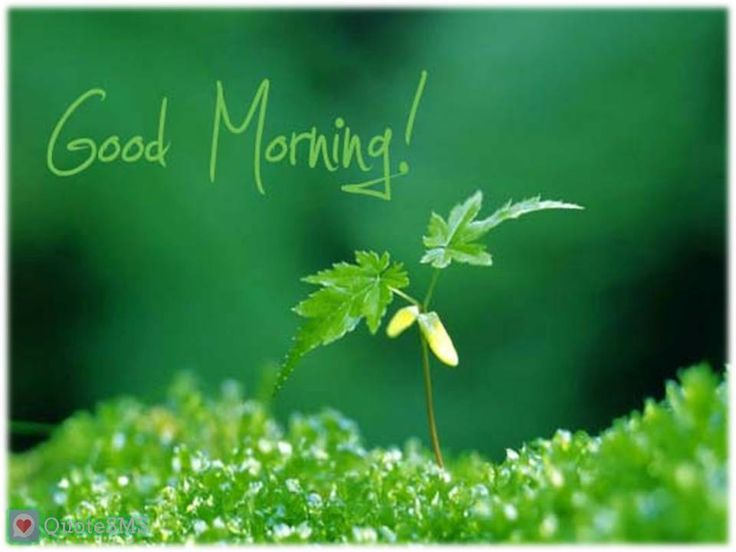 Best 25 Morning Quotes Ideas On Pinterest: 25+ Best Ideas About Romantic Good Morning Sms On