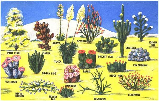 54 best images about desert landscaping ideas on pinterest for Best plants for desert landscape