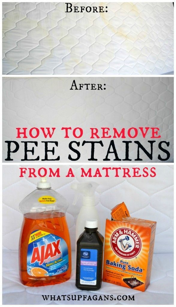 Best Way To Remove Cat Urine From Mattress