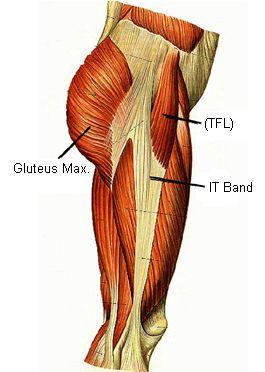 Tensor Fascia Lata (TFL), Ilitobial Band (IT Band) and Glutes - hip pain