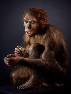 Este es el homo habilis, el primero del género homo (hombre), y considerado por otros muchos el primer homínido, ya que es el primero que tiene un cerebro lo suficientemente grande.