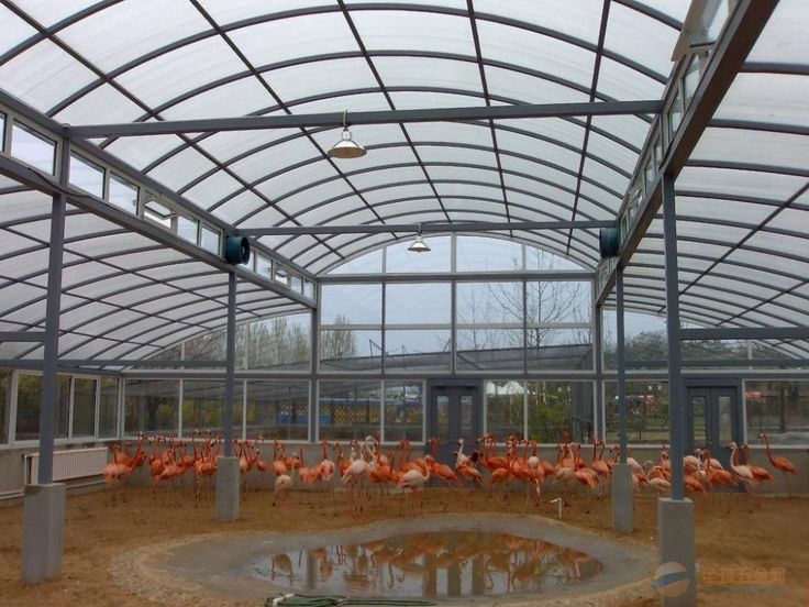 #greenhouse clear #polycarbonate greenhouse, frosted polycarbonate hollow sheet ,polycarbonate sheet price