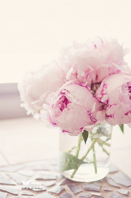 Peonies Pink White Peony Vase Of Bunch Blooms Blossoms Flowers