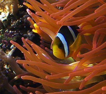 L'acquario di Cala Gonone regala la magia del mare