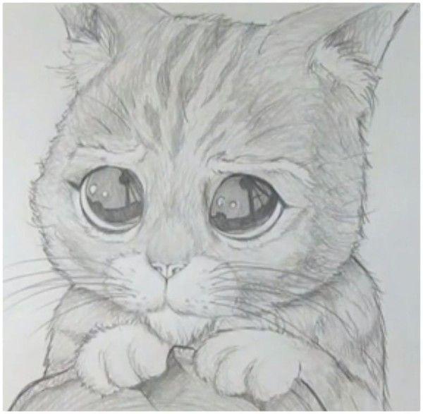 Dibujos Faciles De Amor A Lapiz Kawaii Para Dibujar Imprimir Colorear Colorear Imagenes Animales Dibujados A Lapiz Dibujos Dibujos Faciles