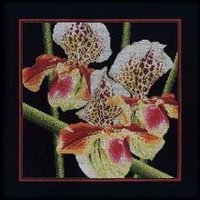 Orchids Paphiopedilum
