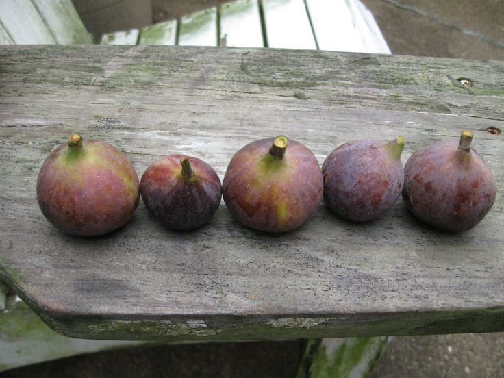 lovely ripe figs