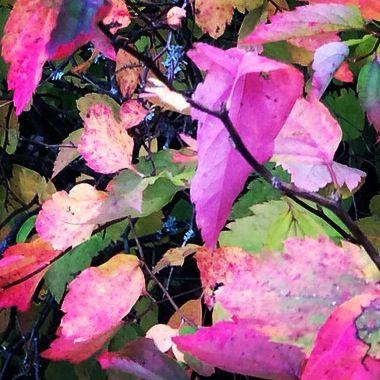 Season colours