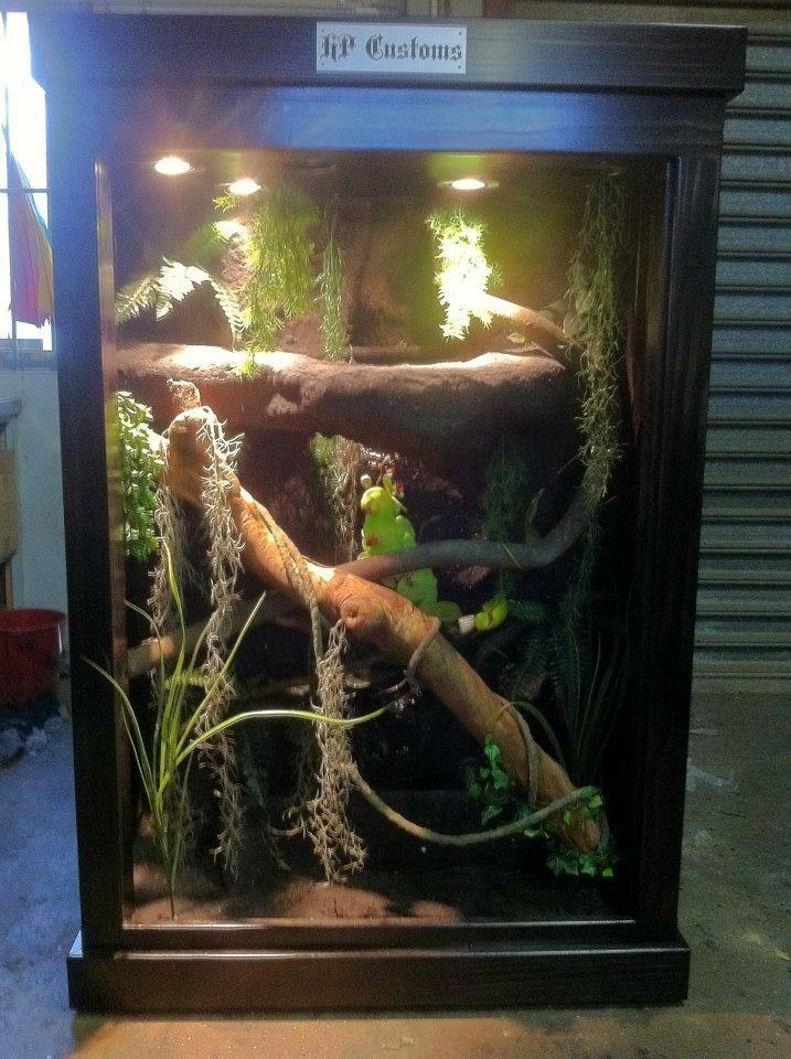 H P Reptiles 19 best images ...