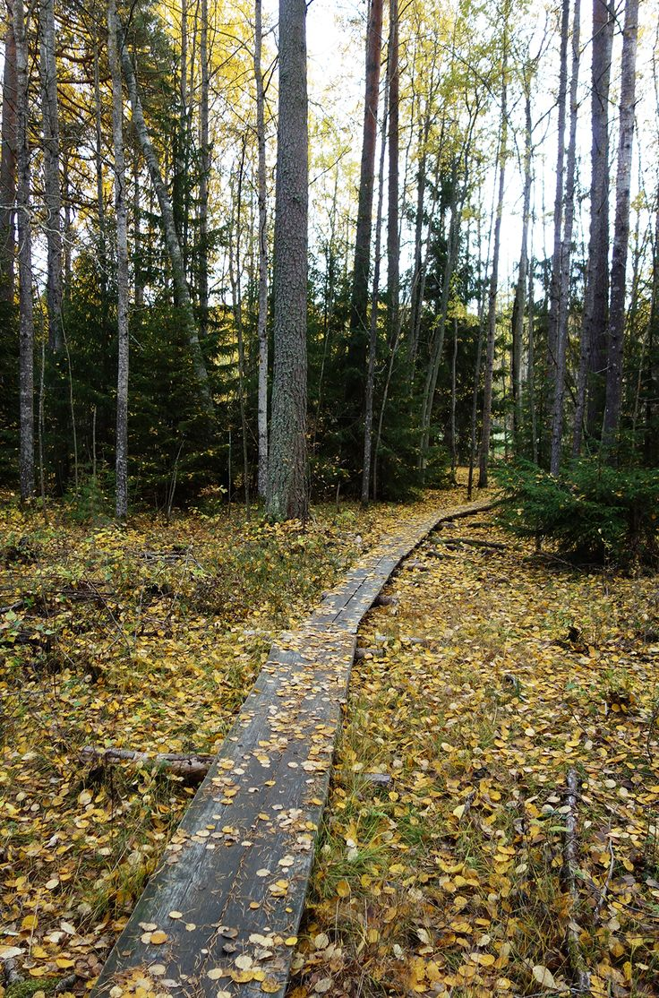 Fall in Finland