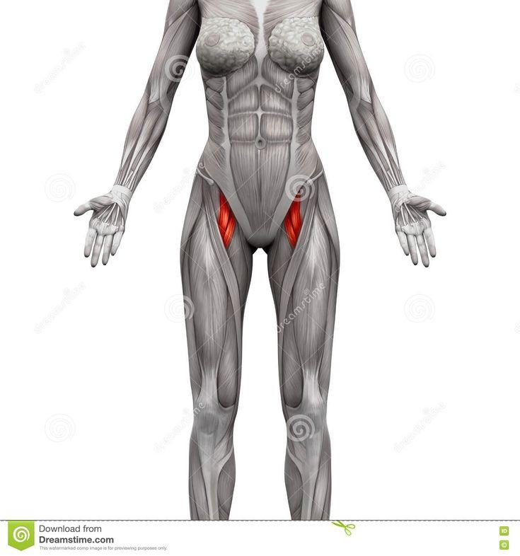 48 best Gesundheit/Körper images on Pinterest | Health, Anatomy and ...