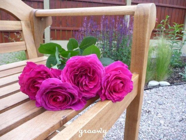 Love Big purple rose
