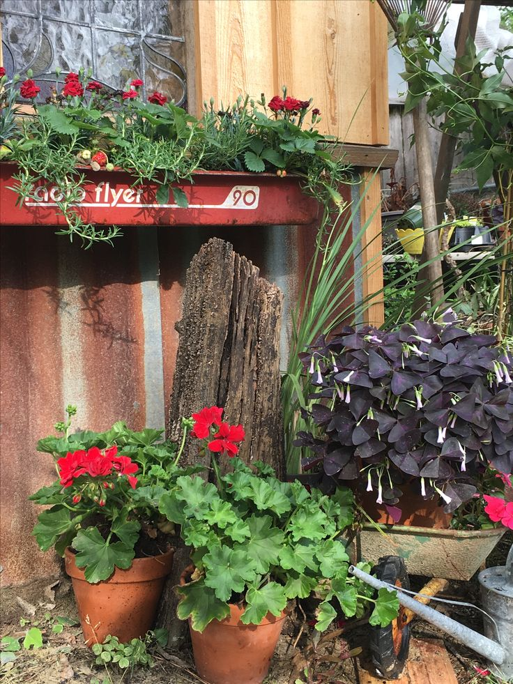 Radio flyer wagon cut in half and attached to potting shed for planter boxes