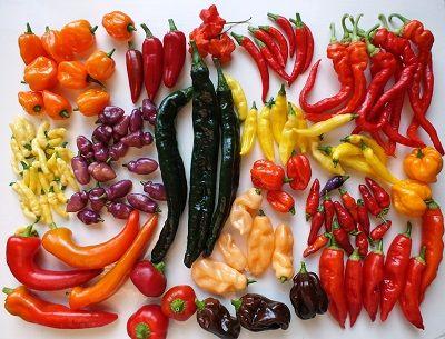Verschillende rassen pepers