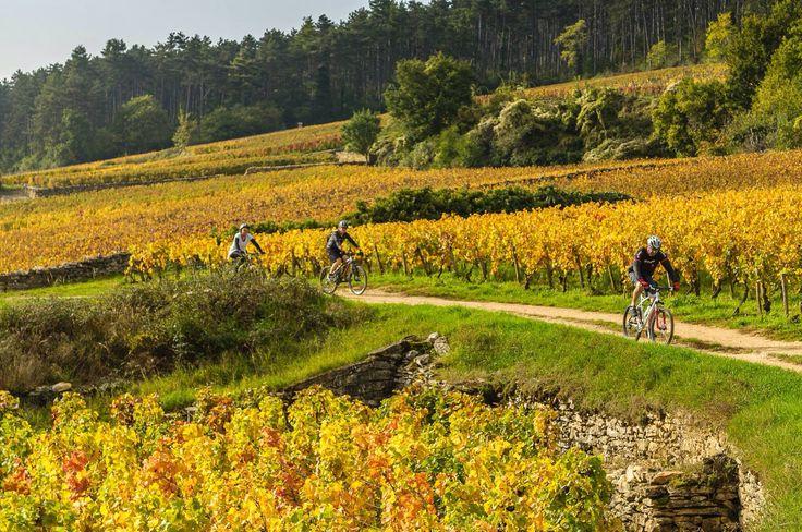 Sillonner les vignes à vélos ! 4 VTT à votre disposition ! www.gite-bourgogne.net