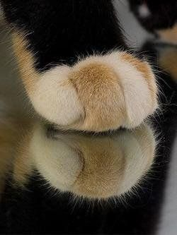 MeowMoe – Cat paws are the best paws … – Kitty, Mimmy & Co.