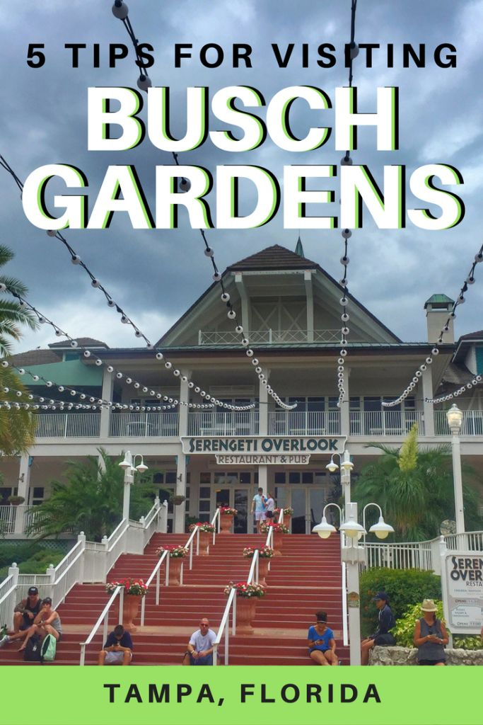 Busch Gardens in Tampa, Florida is an amusement park that has many thrilling rides, exciting shows, and even zoo attractions! Here are some tips to make the most of your experience at Busch Gardens.  Florida | Tampa | Busch Gardens | Tampa Bay
