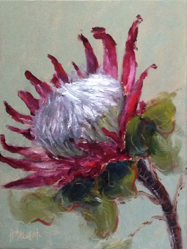 """Protea from a friend"" daily painting by Heidi Shedlock"