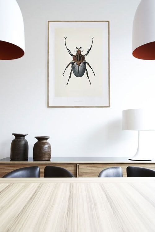 design traveller: Insect inspiration