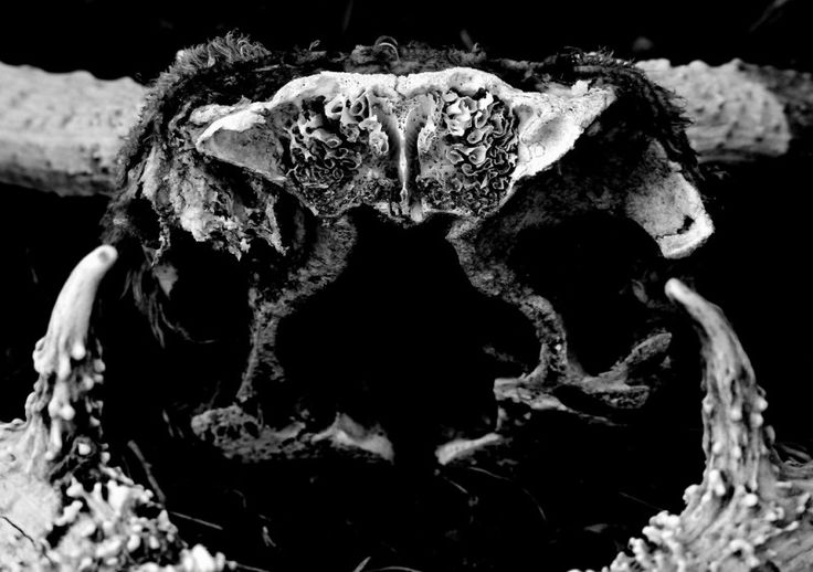 Dem Bones Photo - Visual Hunt