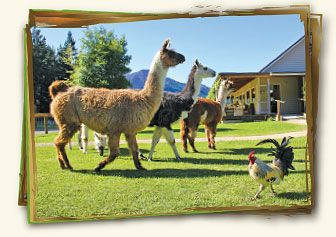 Hanmer Springs Animal Park - for animal lovers of all ages!