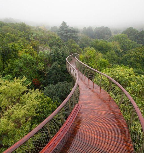 Vamos a caminar encima de los árboles - Ciudad del Cabo, África del Sur