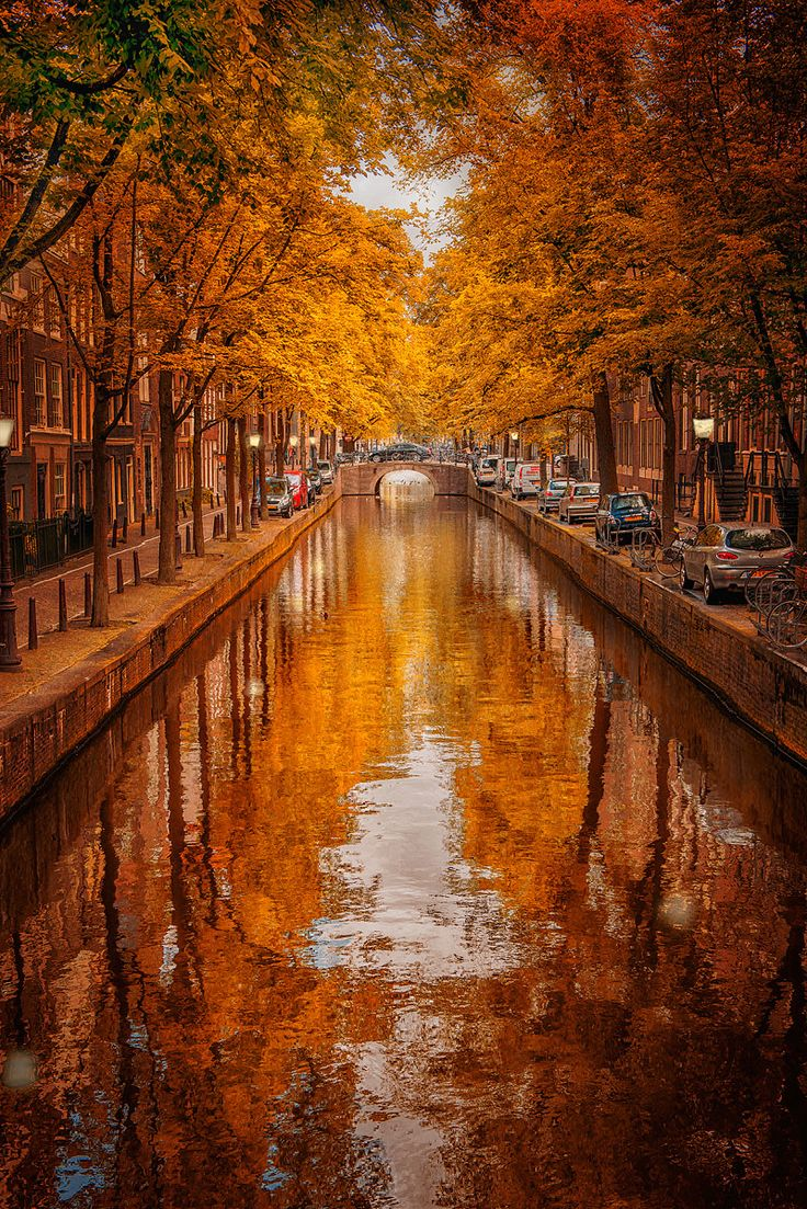 Gorgeous #autumn colours in Amsterdam