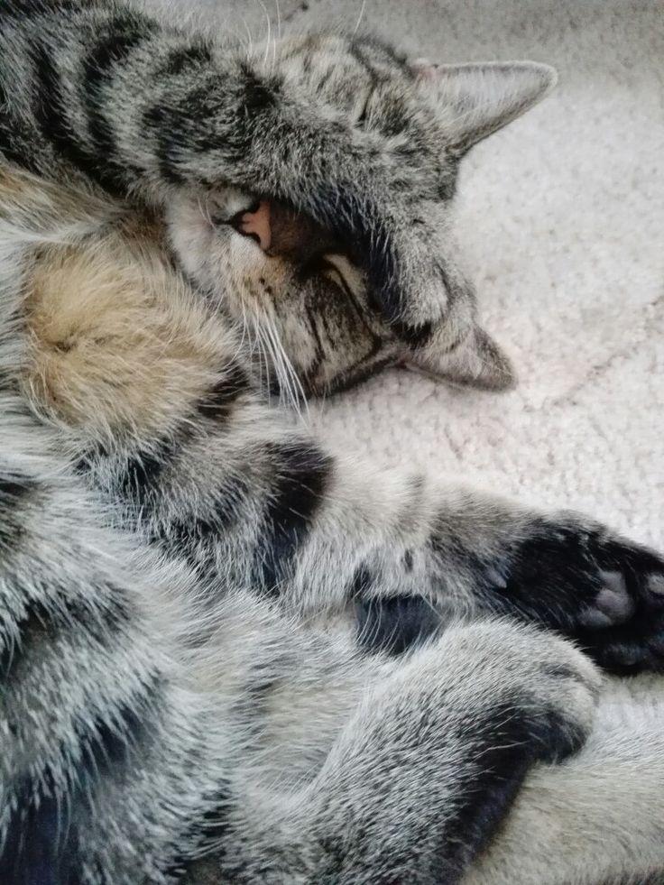 #Cats Tygřík.