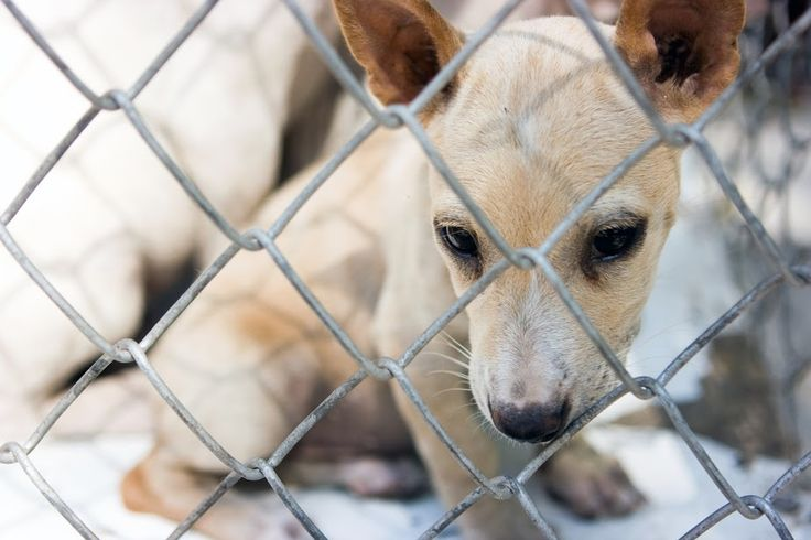 Compassionate Living: BREED SPECIFIC LEGISLATION NOT THE ANSWER