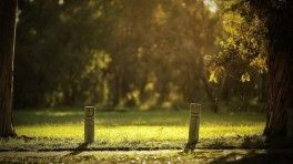summer sunny day park wooden poles wide hd wallpaper