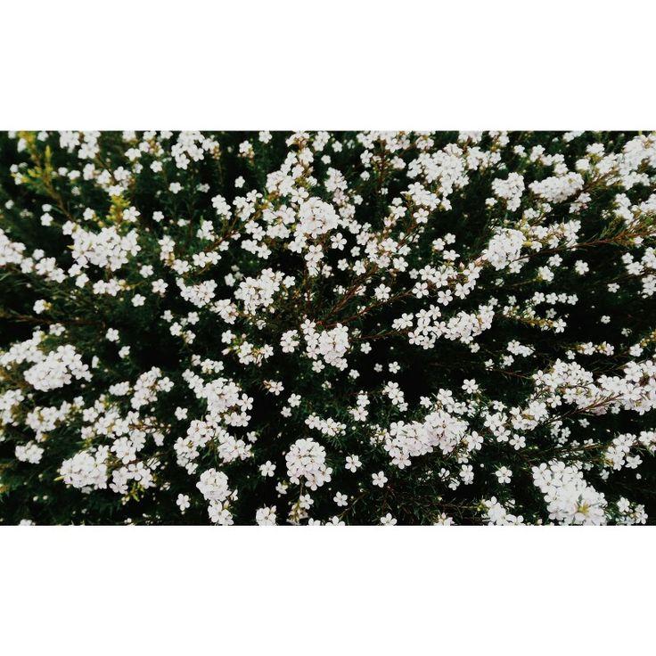 🌿El temporal Félix no nos da tregua en Galicia... Pero a pesar de tener una tarde pasada por agua 🐟 Hemos dado un paseo en familia y encontramos estas flores preciosas ♥ ⭐Feliz sábado a todos ⭐ #miraloquese