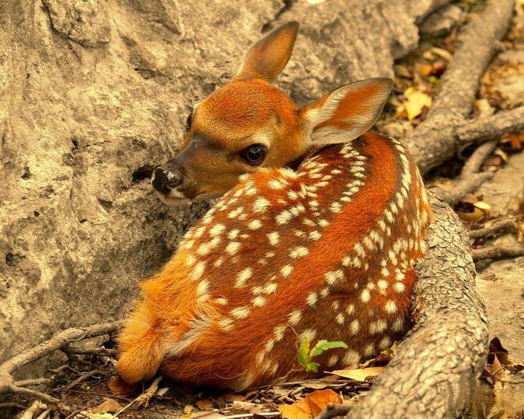 Nature Animals Wonderful Nature Animals Wallpaper 26149wall.jpg