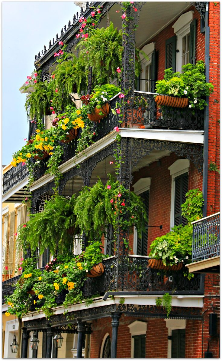 Balcony loaded with Plants and Flowers