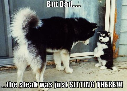 Too cute...it reminds me of the time Chandler took a pork loin right of the plate. Lol!