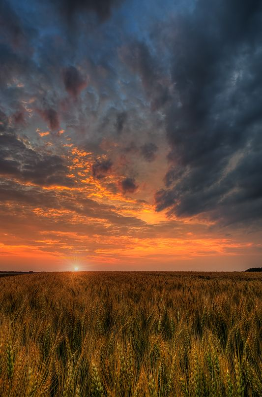 Fire In The Sky by Nebojsa Novakovic, via 500px. Sunset over a golden wheat field in Manitoba, Canada.