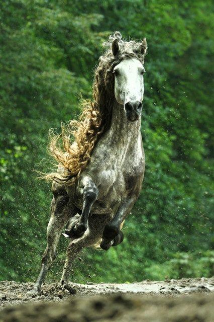 peaceful eye | datgucciboi: Magnificent Horse