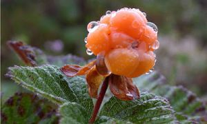 Blog about inspiration for cloudberry jewellery
