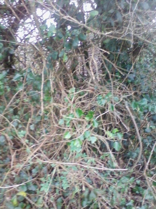 Winter hedge on Inchydony Island #walking #westcork #habit #challenge