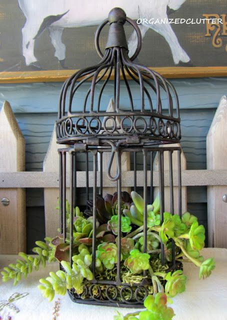 Faux succulents in a decorative bird cage.