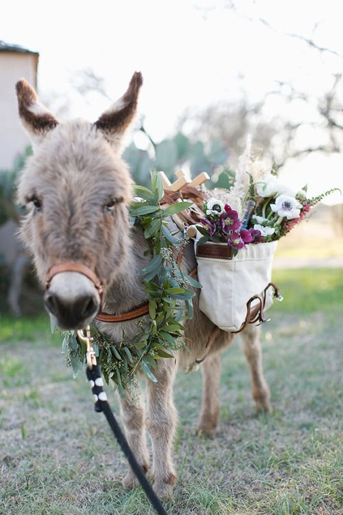 What a darling picture of a flower laden burro. thehorseandhare.com
