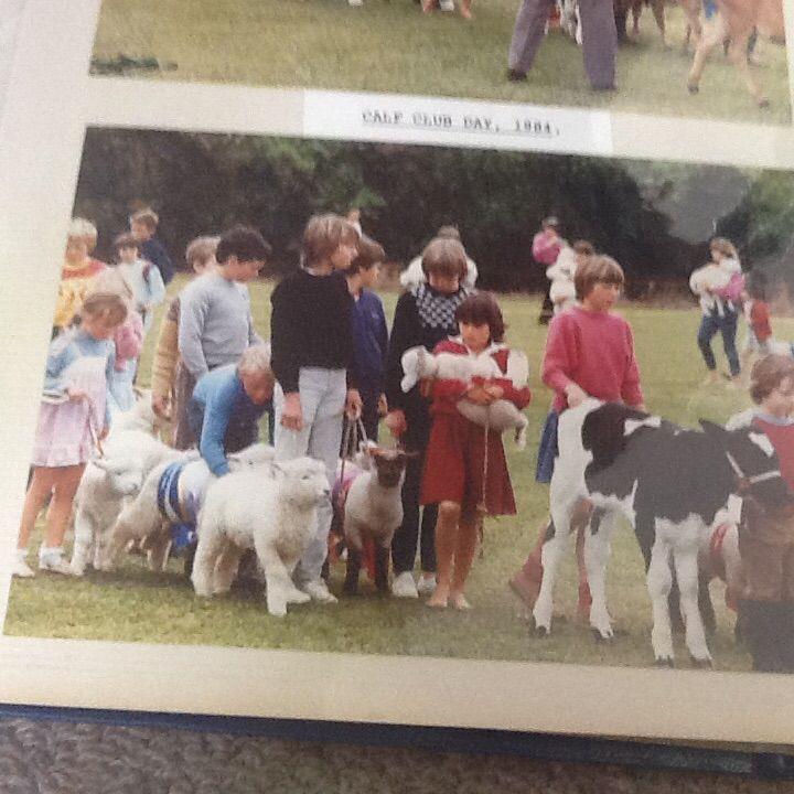 1984 calf club