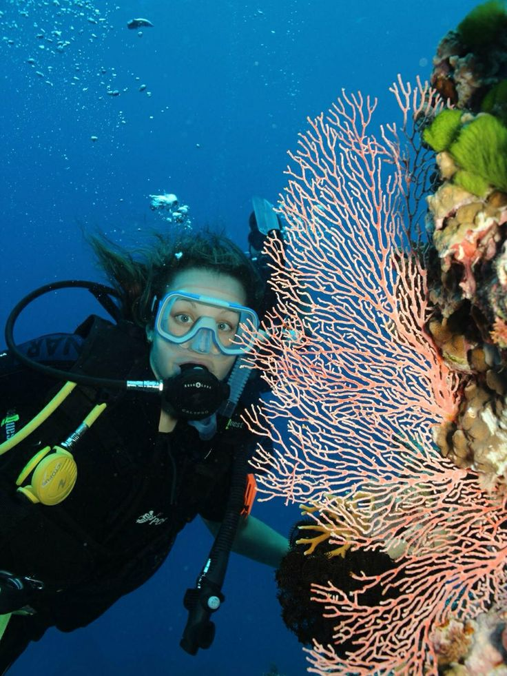 Scuba diving on the Great Barrier Reef . Beautiful coral and sea life.