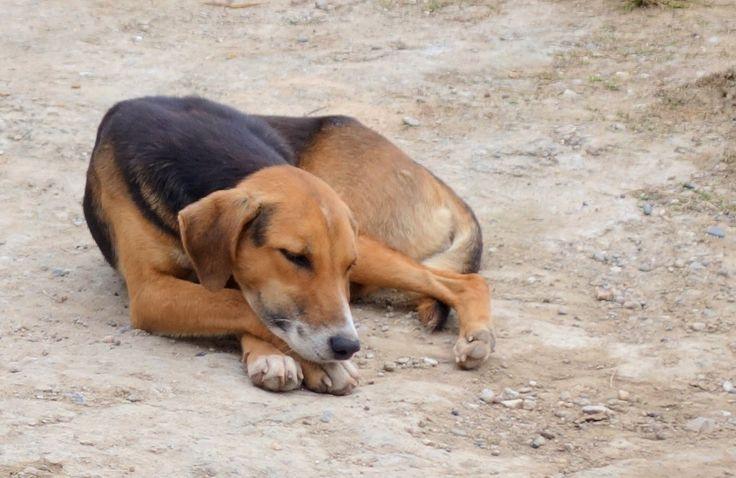Apen matkat: Kiertomatkan osa 21, musiikkia, eläimiä ja lapsia Guatemalan rajalla