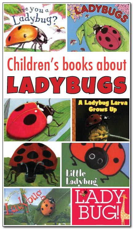 A review of 8 fiction and non-fiction books about ladybugs for kids. Great resources for teaching about the ladybug life cycle!